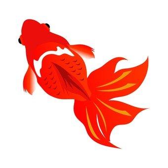 Goldfish (red)