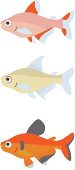 Tropical fish Red phantom tetra etc