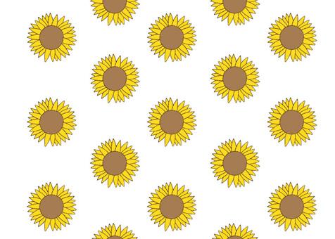 Sunflower pattern background white