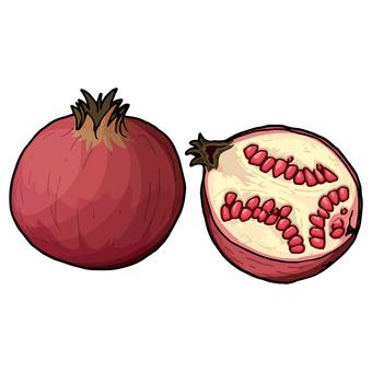 석류 / 석류 / Pomegranate