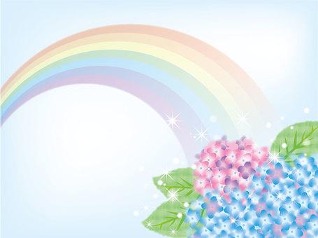Hydrangea Rainbow 3