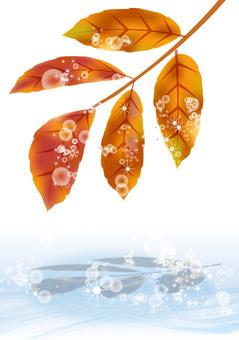 葉子染上秋天的顏色13