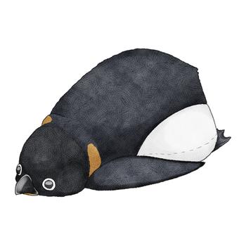 Emperor penguin animal stuffed toy illustration