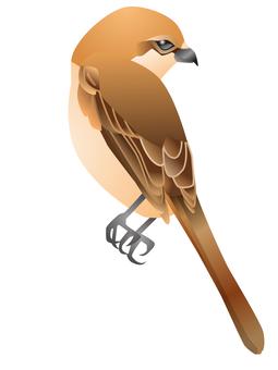 Shrike (female)