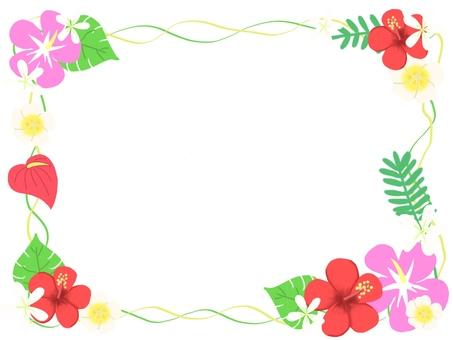 Frame hawaii