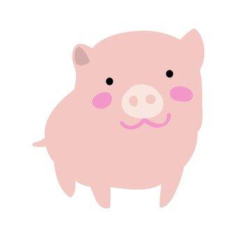 Miniature swine