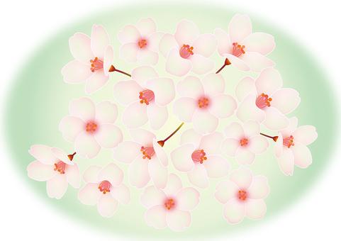 Prayer 桜 Ⅱ