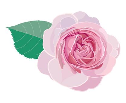Rose Pierre de Ronsar