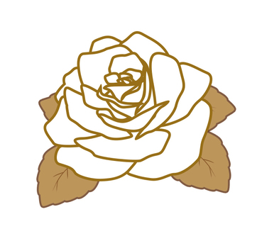 White rose rose
