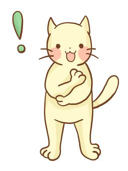 고양이 착상