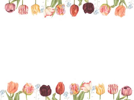 Flower frame 414 Spring's arrival, tulip flower frame