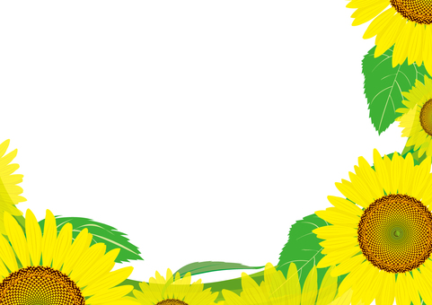 Summer image Sunflower 9