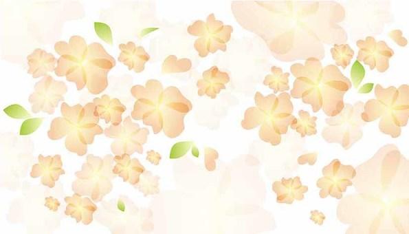 꽃 - 오렌지