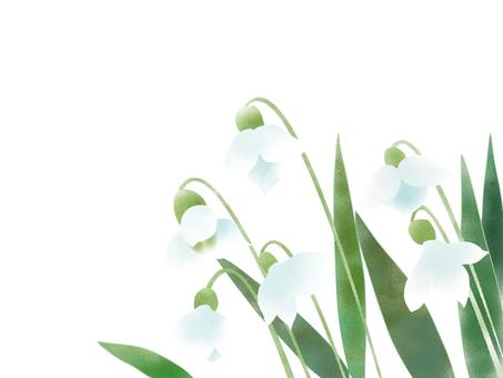 Snowdrop (snow grass)