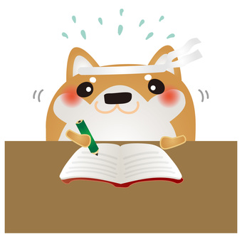 Shiba dog entrance examination