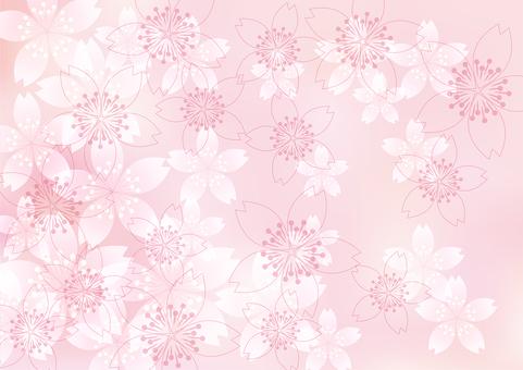 벚꽃의 꽃 55