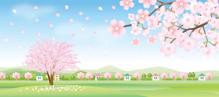 Spring landscape with cherry blossoms in full bloom Header