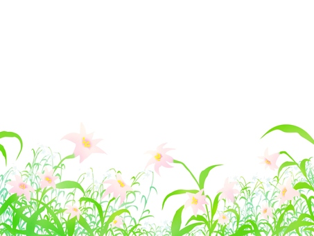 Lily of flowers