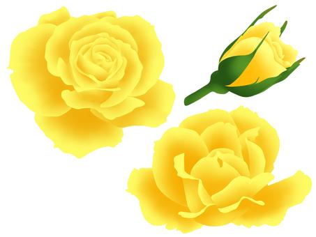 Yellow rose set