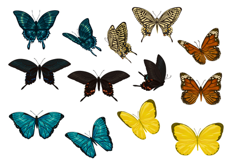Butterfly illustration set material