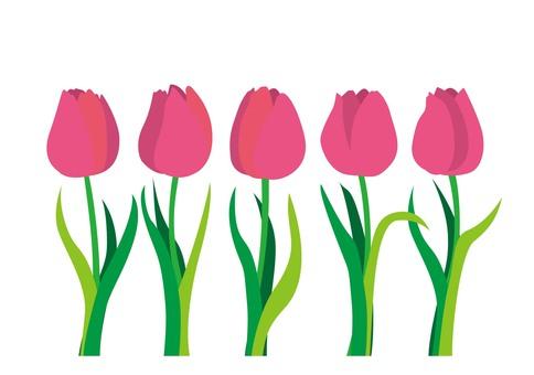 Tulip Pink 01