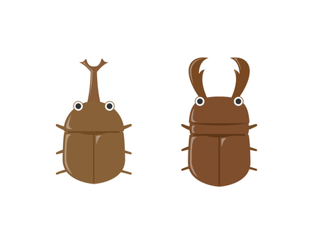 Beetles and stag beetles