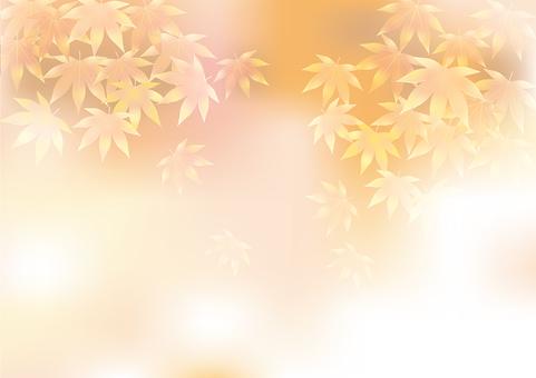Autumn leaves 319