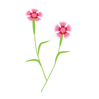 패랭이꽃 ②
