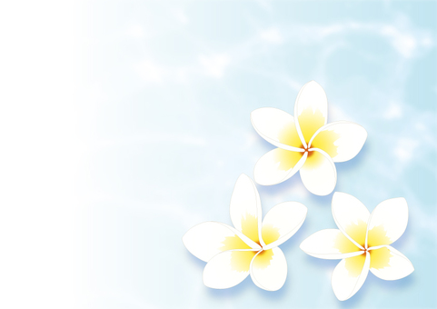 Plumeria_Ocean