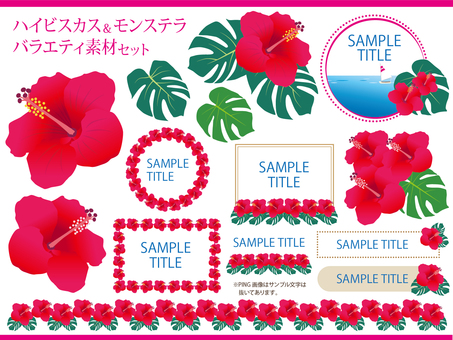 Hibiscus & Monstera Variety Set