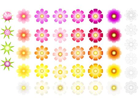 For autumn · Cosmos flower set