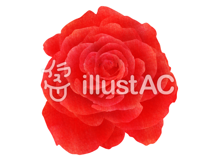 【フリーイラスト素材】赤いバラ