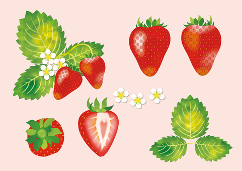 Strawberry illustration set