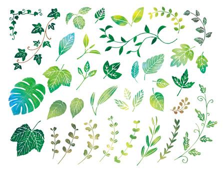 나뭇잎 다양한 수채화
