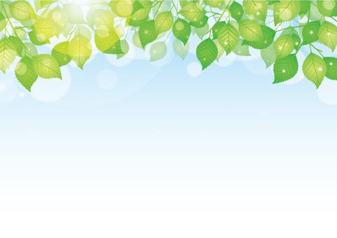 자연 배경 / 햇살 / 신록