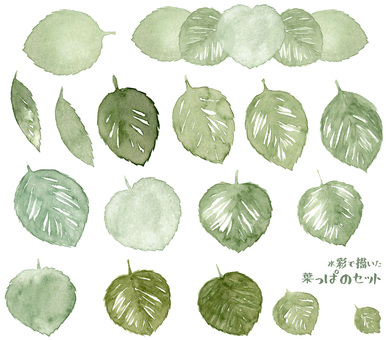 Set of leaves depicted in watercolor