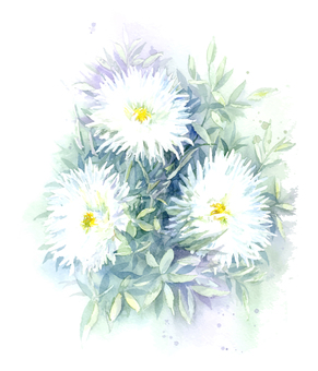White flowers drawn with transparent watercolor