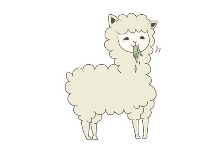 Alpaca eating grass (no background)