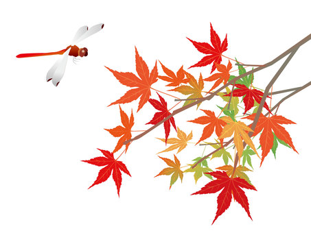 Autumn leaves and red dragonfly