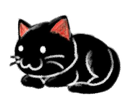 Cat black cute