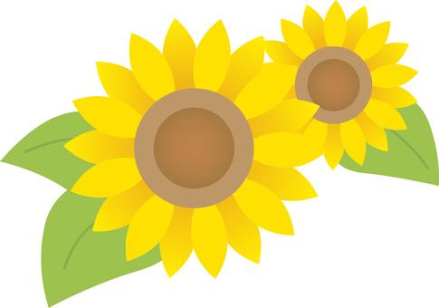 90606. Sunflower 2