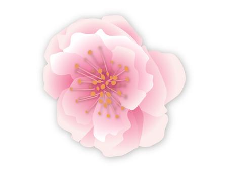 Plum blossom white 2