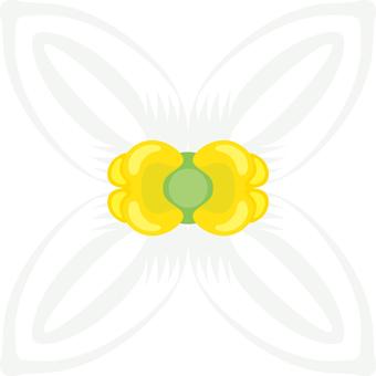 Flower olive