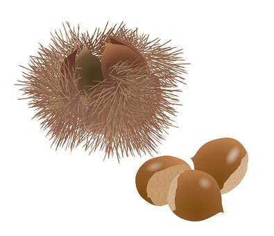 Autumn taste, chestnut, illustration