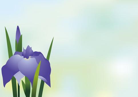 Iris flower 10