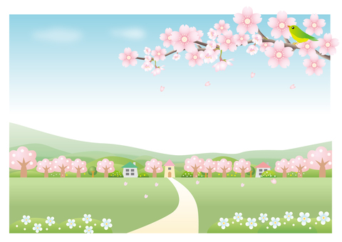 Cherry blossom scenery background