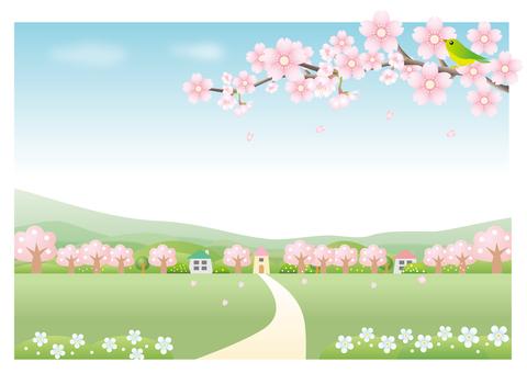 櫻花風景背景