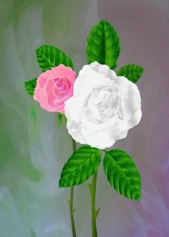 꽃 (장미)