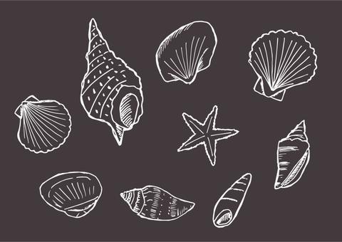 貝殼圖設置(背景黑色,線白色)