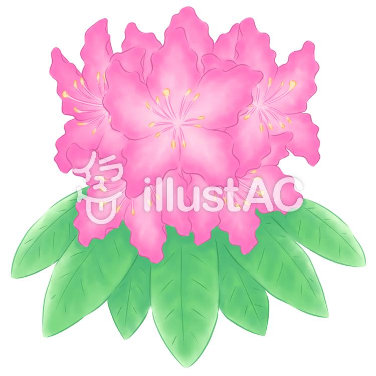 石楠花・濃いピンクのイラスト